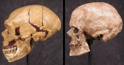 the cro magnons and neanderthals Neanderthal extinction began around 40,000 years ago in europe, after anatomically modern humans had reached the continent this date, which is based on research.